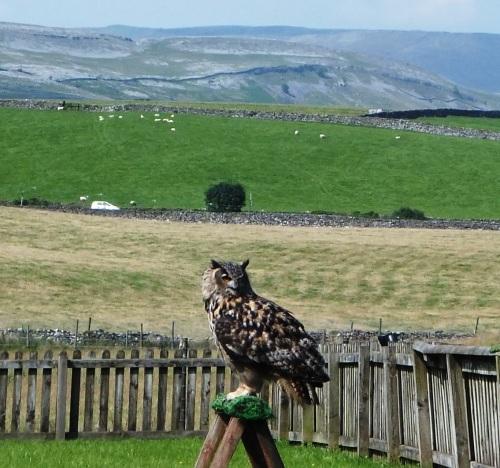 075 Eagle Owl